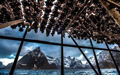 Ingeniør-trainee søkes til Lofoten